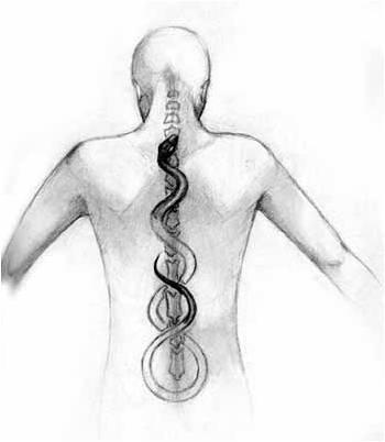 Гръбнакът – стълб на здравето