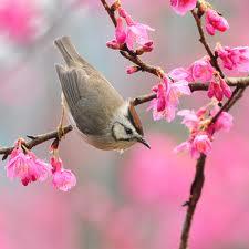 Пролетно равноденствие 2013. Зрънцето на новия живот.