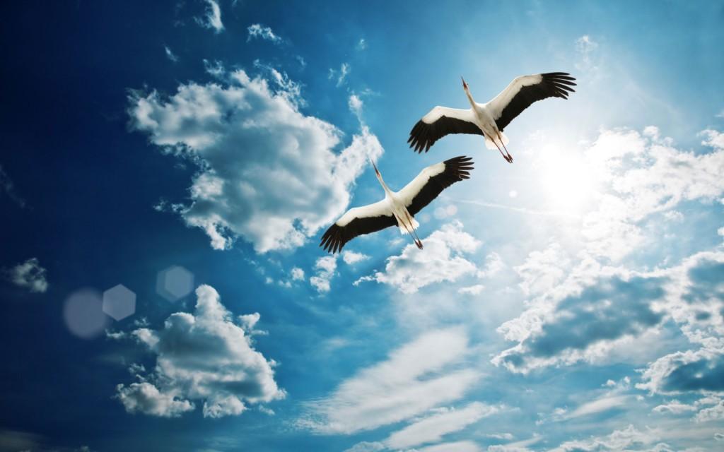 storks-wide