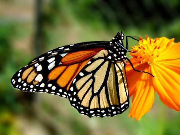 От гъсеница до пеперуда – творци на реалност.