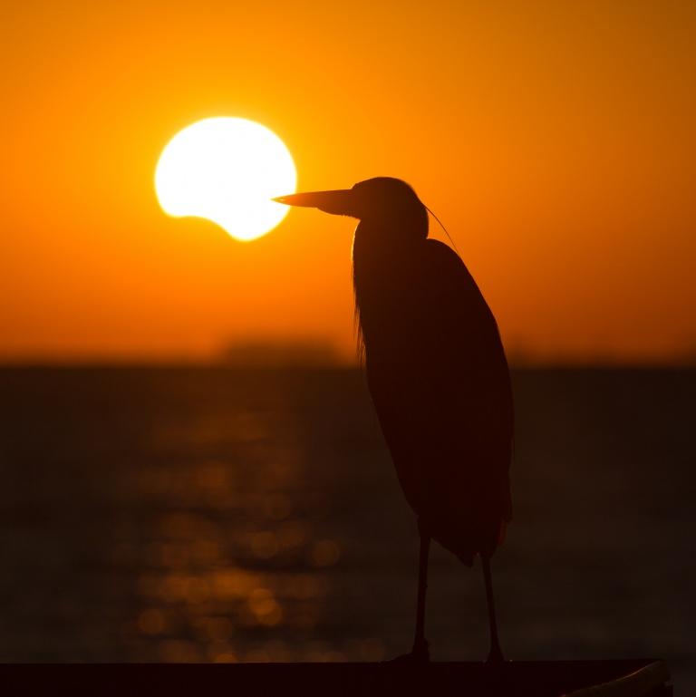 Слънчевото затъмнение на 9 март носи обновление