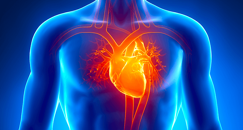 Human-Heart1